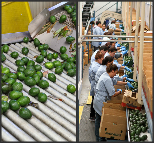 California Avocado Tour | cookincanuck.com
