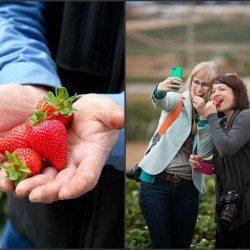 Best Blogger Strawberry Recipes + California Strawberries Trip   cookincanuck.com