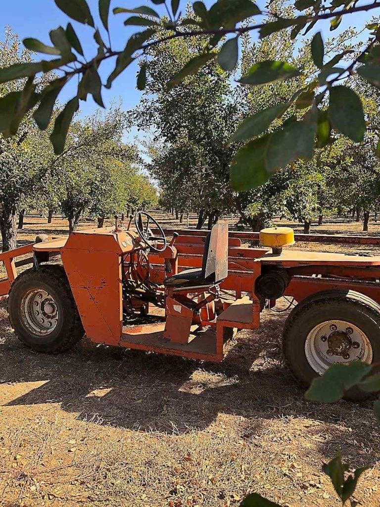 Prune harvester